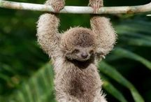 Cute Animals / by Tasha Saca
