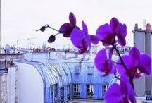 Le General Hotel / Bienvenue au coeur de Paris. Autour s'agite la ville. Vous êtes au #calme. Pureté des lignes - Douceur des matières - Halo de lumière - Chaleur du palissandre - de confort et de #charme, l'espace parle de repos. Bienvenue chez vous.
