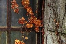 Halloween/Fall / by Linda mosaicbiz