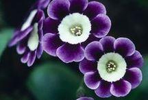 Floral Splendor / by Erin Dooley