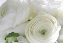 Beautiful flowers....