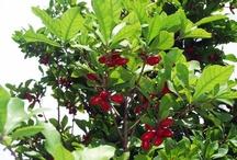Miracle Berries