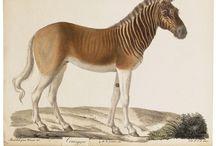 Old illustrations of animals