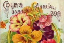Vintage garden catalogue