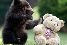 • bears •