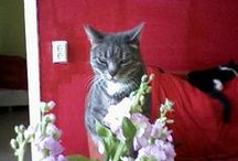 my cats / my cats sheba,lily,angelina,rosanna,morris,nino,vienna &simcha
