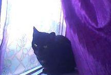 Black Cats /Zwarte katten.