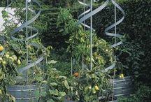 Vertical Veggies