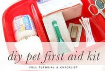 Dog Health / Everything you need to know about your dogs health
