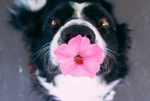 Fofura | Pets / Para alegrar a vida de qualquer um.