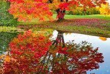 Michigan Fall Colors / Beautiful trees in autumn