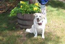 Pet Friendly Michigan Vacation Homes / Michigan's pet friendly cabins and vacation rentals.