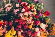 Vivir en primavera, es pan comido / La #primavera ya está aquí con sus olores y colores. Recuerda vivir al máximo esta estación del año con #AlbaHorneados de la mano.