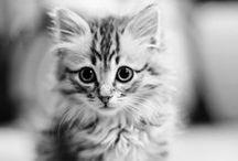 Koty / koty, kotki, koteczki...   /// cats ^^