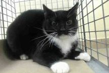 SAFE <3 ADOPTED or RESCUED