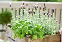 giardino...piante...piantine...