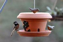 Bird feeders and house
