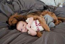 Human Dog Bond / Nothing like it!