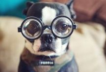 Doggie Wisdom
