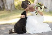 LOVE    dogs & weddings