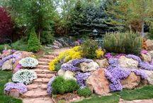 Beautiful Yard&Garden 3