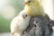 Мимимишность/животные / Детеныши животных