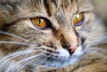 Felines / feline world