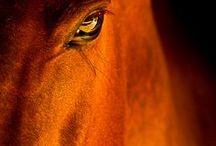 PRIDE / HORSES