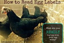 {Homesteading} Keeping Chickens / Tips for keeping and caring for chickens.