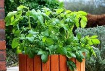 Gardening / General gardening tips and ideas for growing your own fruits and vegetables at home.