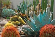 Desert Landscaping / Think you can't grow things in the desert? Think again, and get inspired by these easy solutions for creating a beautiful outdoor space.