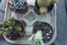 Nature / #plants #nature