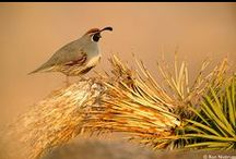 Nevada Wildlife / A collection of amazing photos capturing the wildlife of Nevada.