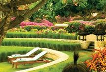 :: Garden's to Amaze :: / Strictly an garden & outdoor design inspiration design board.  Thanks & Enjoy. Patio, Container, Hidden, Front yard, Back yard,Fire Pit, Koi ..Gardens Etc..No How To's just inspiration thanks ! Quality-Not-Quantity in Pins! Understand, Some pins Will & can be deleted! Please if you are having any problems with the board or board-related please send me a pin with the description and issue in message. Thanks Everybody ..Just want everyone To have a great time! / by Lucy Bishop