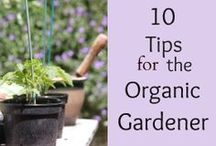 Organic Gardening / There are many reasons to go organic these days, especially as we learn more about the imbalance in nature created by the chemicals and other ways that people garden these days.   Organic gardening uses practices that are more harmonious with nature. Developing an organic awareness becomes key in the products we purchase and use.