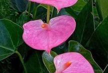 ÇİÇEKLER-1 (FLOWERS-1)