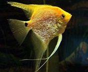 BALIKLAR-2 (FISHES-2)