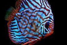 BALIKLAR-S (FISHES-S)
