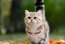 KÜÇÜK KEDİ-S (SMALL CAT-S)