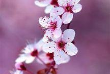 Beautiful *^*