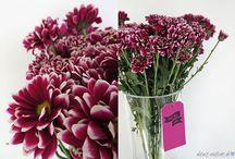 • FLOWERS TIPS • / Blumen, Flowers, Dekoration, decoration