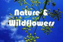 Nature & Wildflowers of Living Libations Land