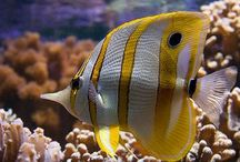 Saltwater fish / by Janine