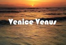 Venice Venus: Store / This space will be the home of pop-ups, pick-ups and private consultation appointments.  Opening December 12th, 2015