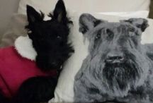 Clarabel and Emma my Scottie's and friends. / My Clarabel and other cute Scots!