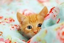 Pets / Fabulous Images of Dogs, Cats, Rabbits and Other Lovable Pets. / by IP Factly