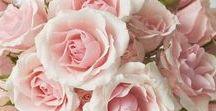 flowies / flowers i like