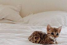 cutest nugs