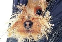 """Terriers / <meta name=""""pinterest"""" content=""""nopin"""" /> / by Beths97202"""
