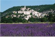 Lavande   Lavender / Relax with the blue gold of Provence / by L'OCCITANE